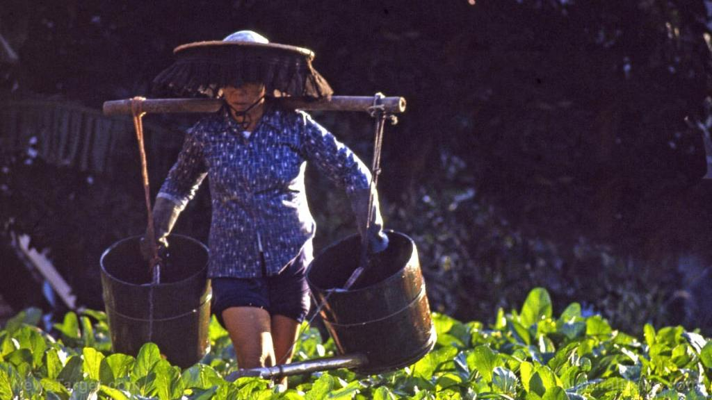 Organic farming employs more workers than conventional farms and encourages community development, according to survey
