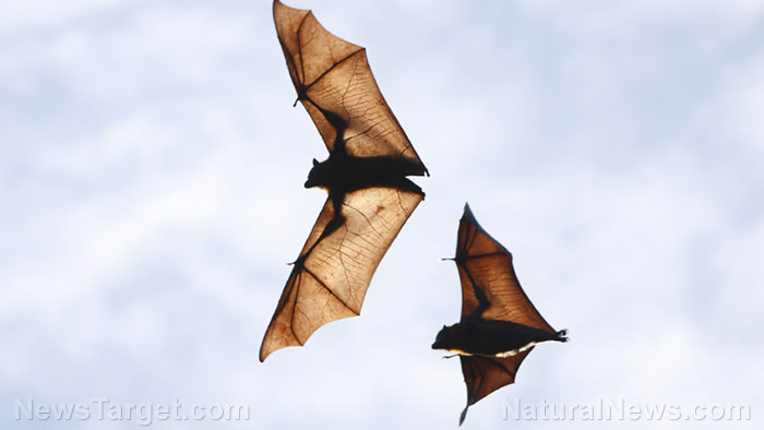 Bats haven't been sold at Wuhan wet markets for two years