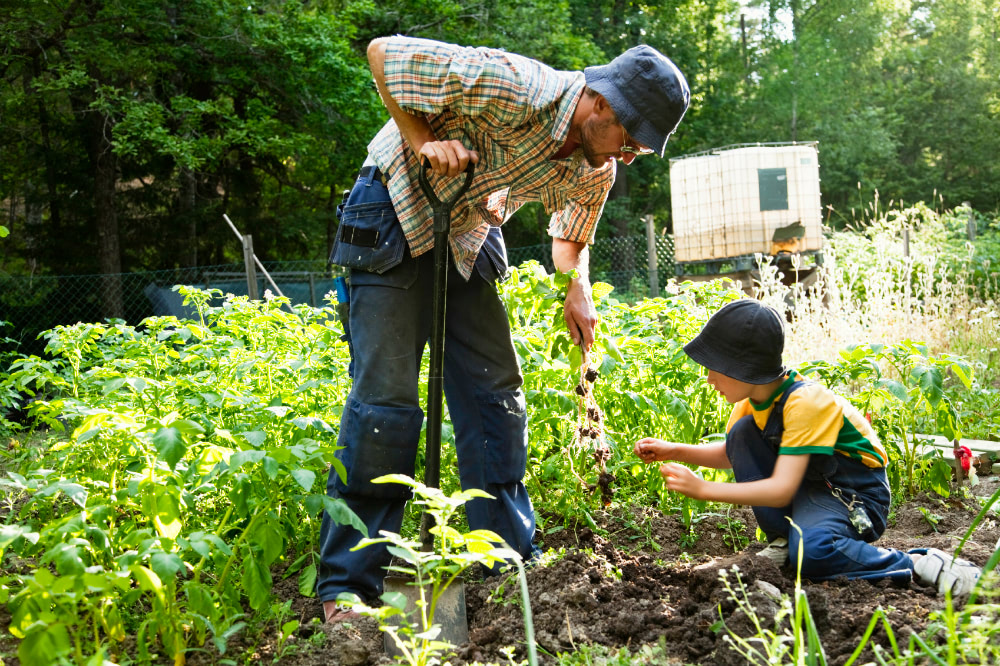 Weed-free gardening: 4 tips for effective weed control