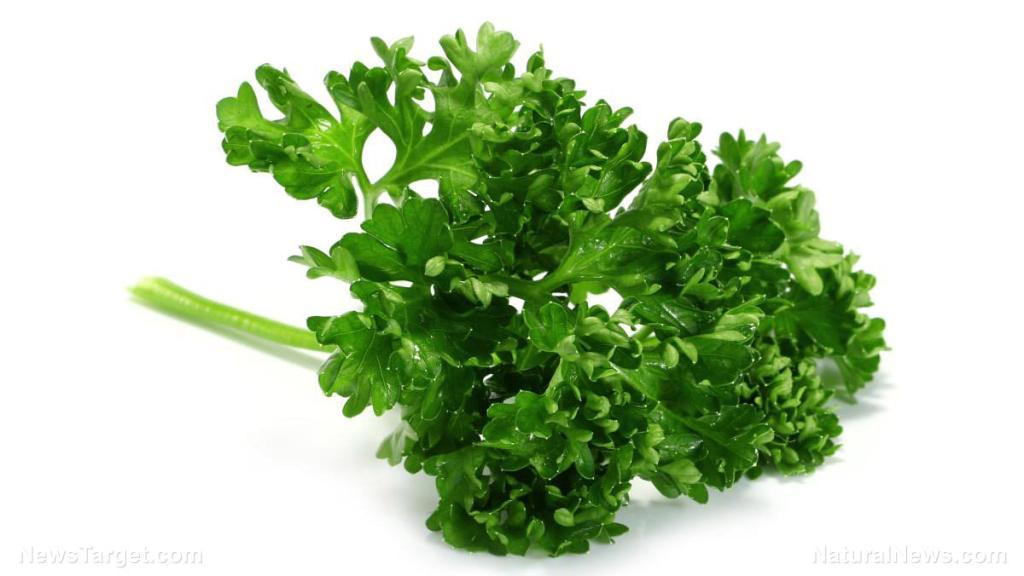 Prepper medicine: How to use parsley, a versatile medicinal herb