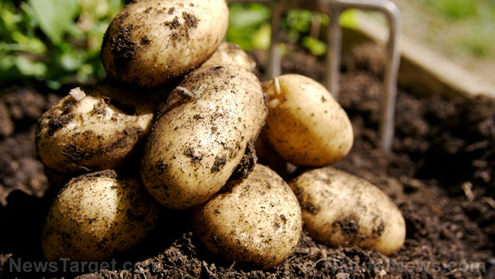 Fruits and vegetables to store in your root cellar