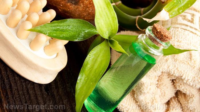 Prepper medicine: How to make and use tea tree oil