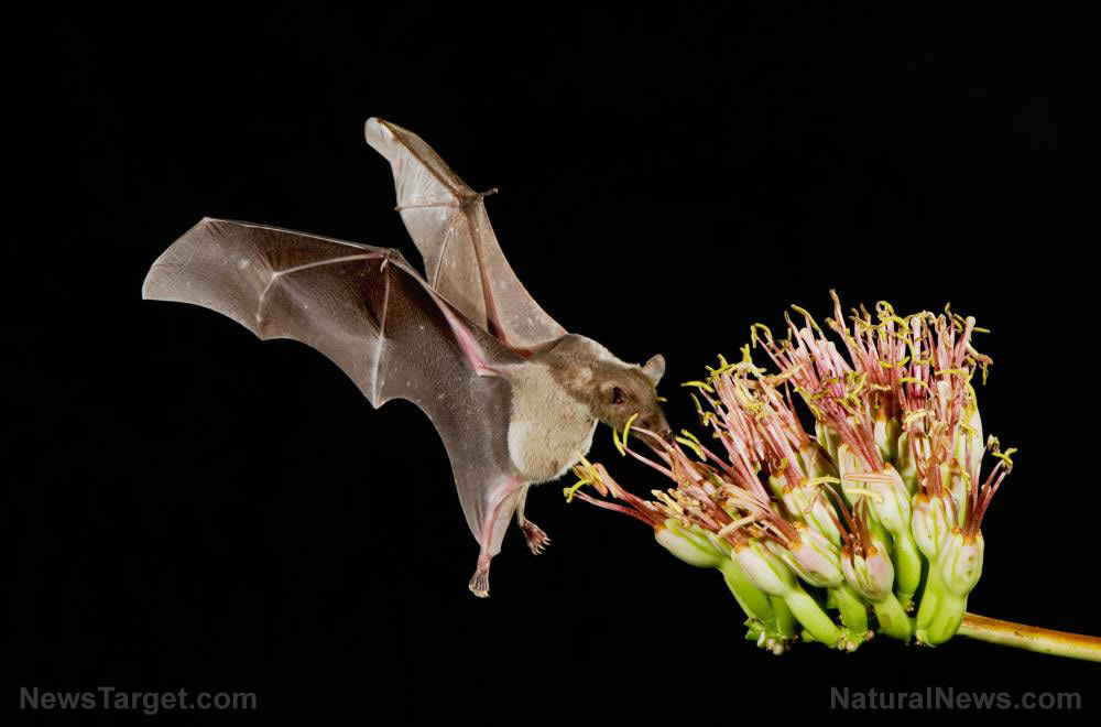 """EXPOSED: Wuhan scientists planned to use """"skin-penetrating nanoparticles"""" to unleash """"chimeric covid spike proteins"""" into bats in China"""