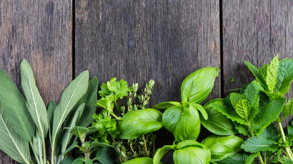 Prepper medicine: How to use dyer's woad, a natural antiviral