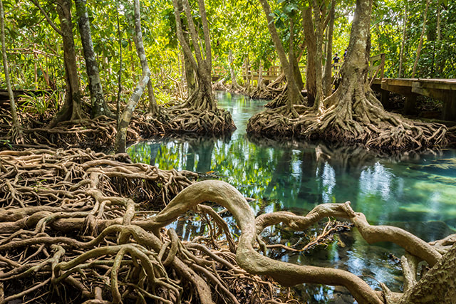"""Experts call for the protection of mangrove patches, no matter how big or small, to preserve """"incredibly important ecosystems"""""""